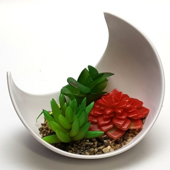 SUCCULENT TABLE DISPLAY