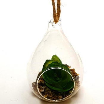 SUCCULENT IN GLASS HANGING
