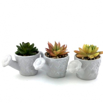 CEMENT W-CAN SUCCULENTS