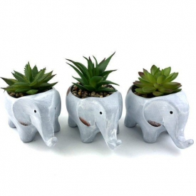 CEMENT ELEPHANT SUCCULENTS