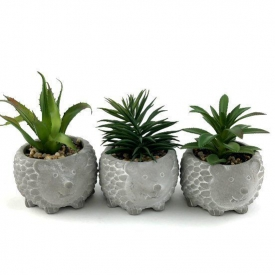 CEMENT HEDGEHOG SUCCULENTS