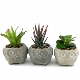 CEMENT OWL SUCCULENTS