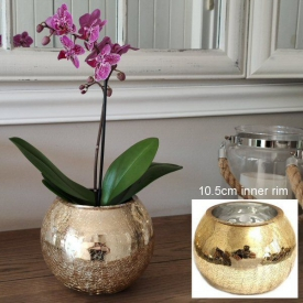 GLASS CHLD / POT COVER  GOLD MED