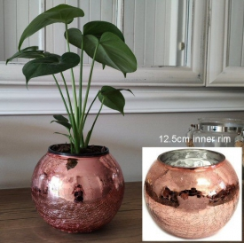 GLASS CHLD / POT COVER ROSE GOLD LRG